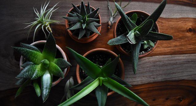 Fünf kleine Pflanzen in Keramiktöpfen von oben fotografiert